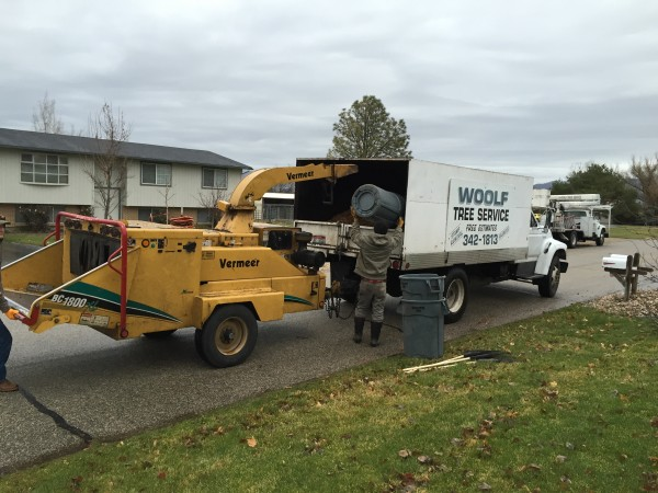 BOISE ID TREE AND SHRUB REMOVAL