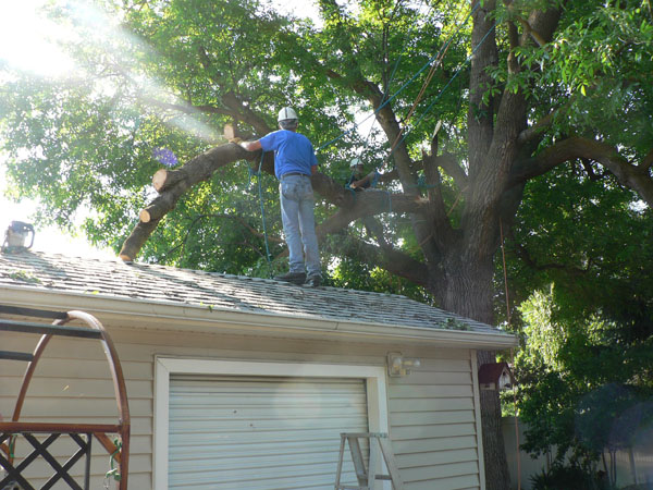 BOISE ID EMERGENCY TREE AND BRANCH REMOVAL