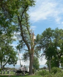 Boise ID Hazardous Tree Removal